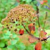 Autumn Berry Blid som Arkivbild