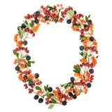 Autumn Berry Wreath. Autumn berry oval wreath with blackthorn, hawthorn and rowan berries on white background with copy space royalty free stock photos