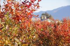 Autumn Berry Season Stock Photo