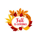Autumn berry for vector fall is coming poster Royalty Free Stock Photo