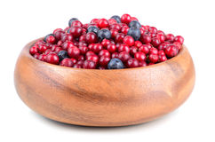 Autumn berrys Stock Photography