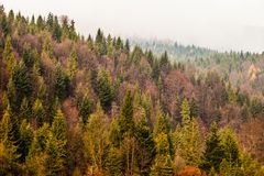 Autumn Beskid mountain forest background, Poland Stock Photo