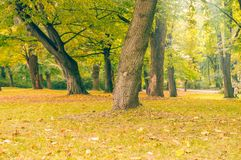 Autumn beutiful park landscape in the city Royalty Free Stock Photography