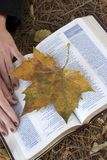 Autumn Bible royalty free stock photography