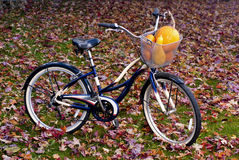 Autumn bicycle with a basket full of squash Stock Photography