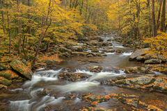 Autumn Big Creek. Autumn landscape of Big Creek framed by trees, Great Smoky Mountains National Park, Tennessee, USA Royalty Free Stock Image