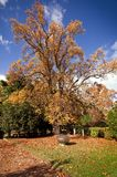 Autumn big tree in gardens Stock Photo