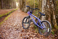 Autumn bike ride Royalty Free Stock Photos