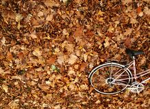 Autumn bike romance Stock Images