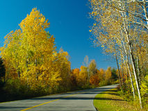 Autumn birch forest. Autumn drive way in Gatineau Park, Hull, Canada (E-1 + olympus zuiko 24mm F2.8 royalty free stock images