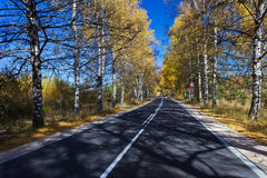 Autumn Birch Forest Road Stock Photography
