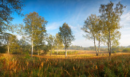Autumn landscape horizontal background Royalty Free Stock Photography