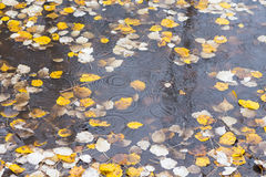 Autumn birch leaf on the water Royalty Free Stock Images