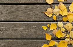 Autumn  birch leaves and pine needles on a wooden background Royalty Free Stock Photo