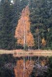 Autumn Birch por el lago Fotografía de archivo