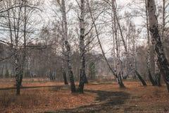 Autumn birch tree forest road landscape. Birch tree forest road in autumn season stock images