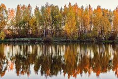 Autumn birch trees by the lake. Autumn birch trees by the lake at sunset time stock image