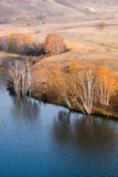 Autumn birch trees in waterside Stock Image