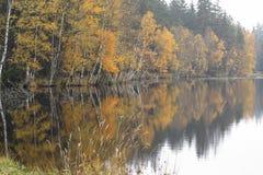 Autumn Birches en la orilla del lago Imagen de archivo libre de regalías