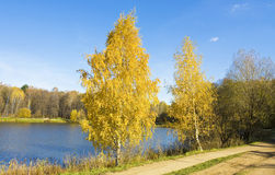 Autumn, birches near lake Stock Image