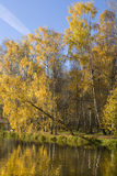 Autumn, birches near water Stock Photo