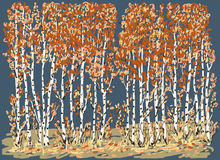 Autumn birches Stock Images