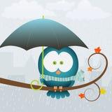 Autumn bird. Little bird hiding under umbrella from the rain Royalty Free Stock Image