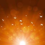 Autumn Birds Migration Immagini Stock Libere da Diritti