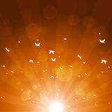Autumn Birds Migration Royalty Free Stock Images