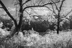 Autumn Black e bianco Immagini Stock Libere da Diritti