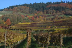 Autumn in Black Forest. The bright colors of the last days of autumn stock photos