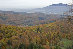 Autumn in the black forest Royalty Free Stock Image