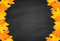 Autumn blackboard background with realistic maple leaves Stock Photos