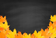 Autumn blackboard background with realistic maple leaves Stock Image