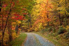 Autumn Blaze Stock Photography