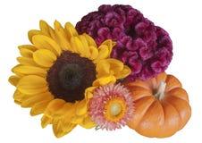 Autumn Blooms e cabaça Imagens de Stock Royalty Free