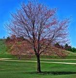 Autumn Blossom Photographie stock libre de droits