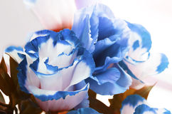 Autumn blue flowers Stock Photography