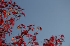 Autumn and a blue sky Royalty Free Stock Image