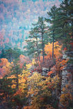 Autumn bluff. Limestone bluff with pine trees surrounded by autumn color royalty free stock images