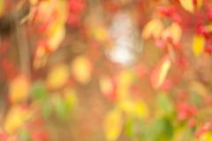 Autumn blur background Stock Photo