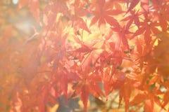 Autumn blur background Stock Image