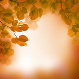 Autumn, blurred background Royalty Free Stock Photography