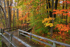 Autumn board walk Stock Image