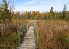 Autumn Boardwalk. Boardwalk on Jack Pine Trail. Ottawa, Ontario. Canada Stock Photography