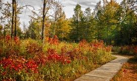 Autumn Boardwalk Immagine Stock