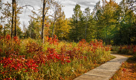 Autumn Boardwalk Stock Image
