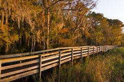 Autumn Boardwalk with Beautiful Golden Light Royalty Free Stock Photography