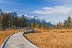 Autumn Boardwalk Stock Photography