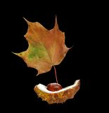Autumn boat. Detail of a chestnut and autumn leaf stock photo